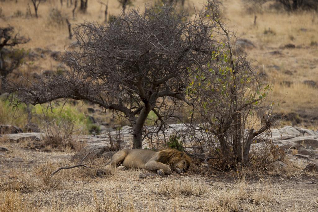 29072015 - Tanzania -  Serengeti 5D - _MG_6114