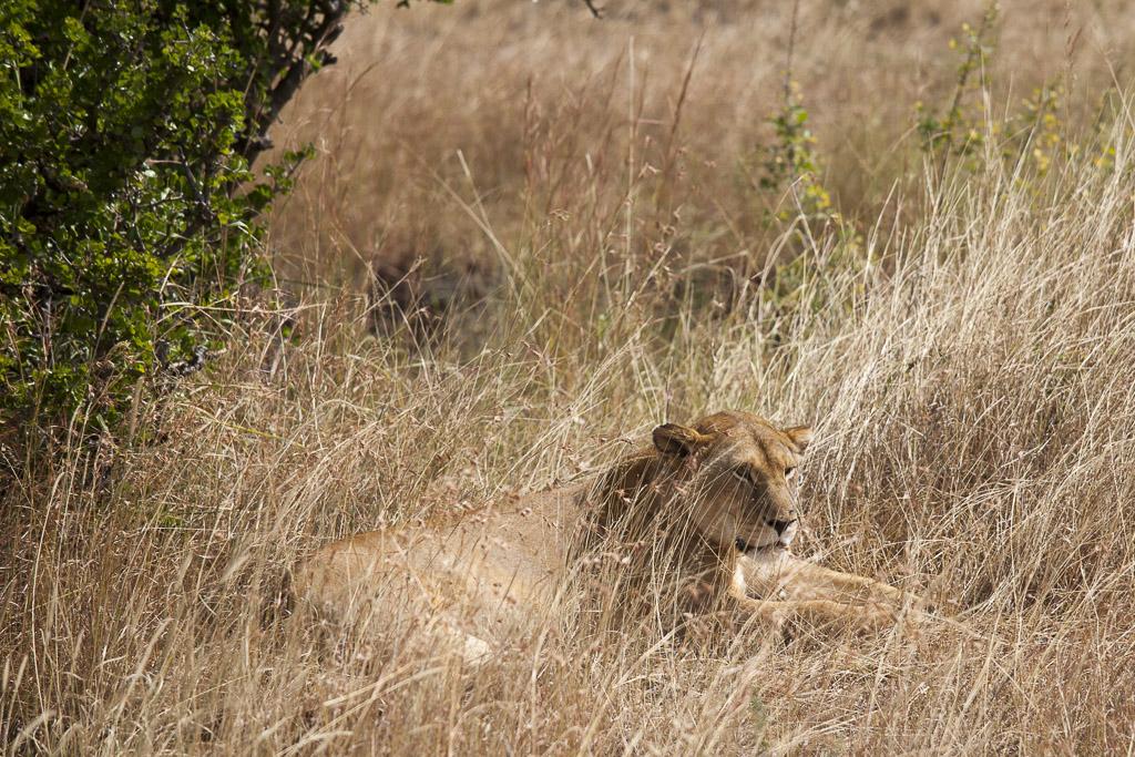 29072015 - Tanzania -  Serengeti 5D - _MG_6125