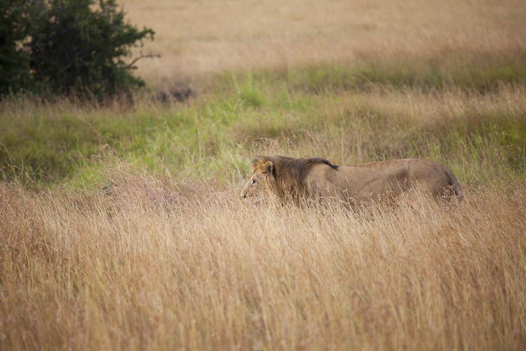 29072015 - Tanzania -  Serengeti 5D - _MG_6131