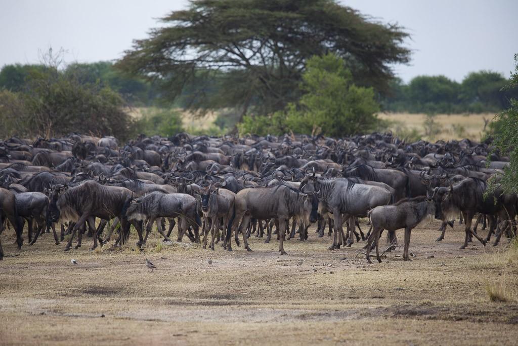 29072015 - Tanzania -  Serengeti 5D - _MG_6146
