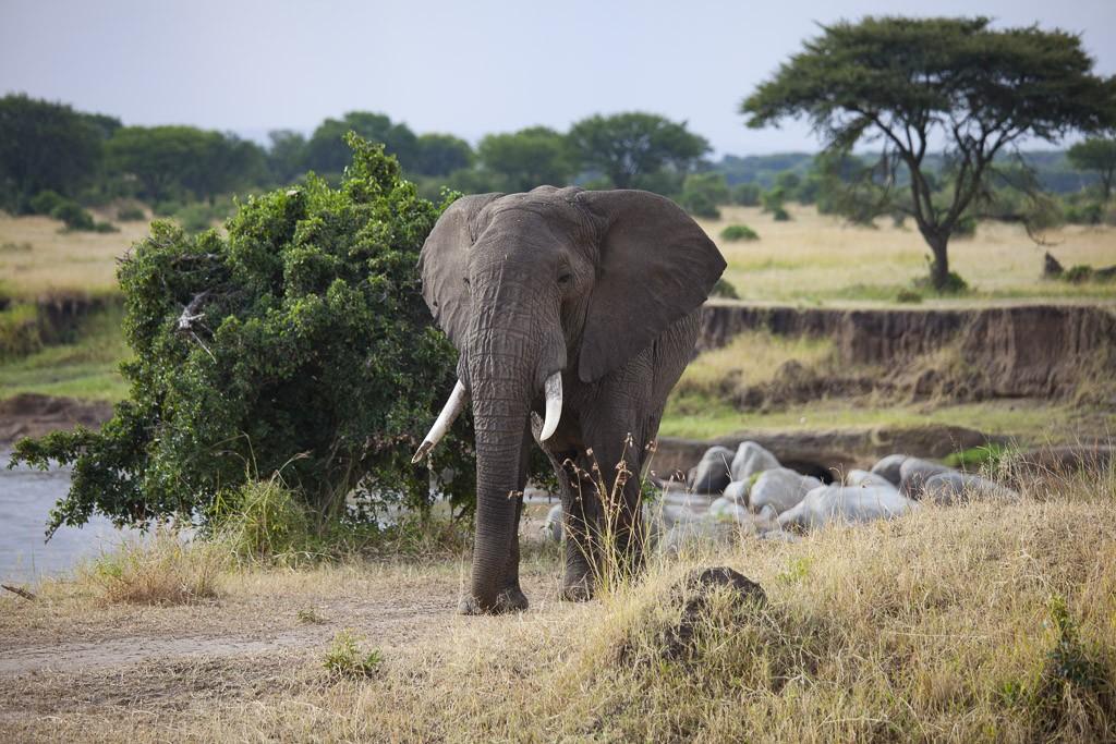 29072015 - Tanzania -  Serengeti 5D - _MG_6161