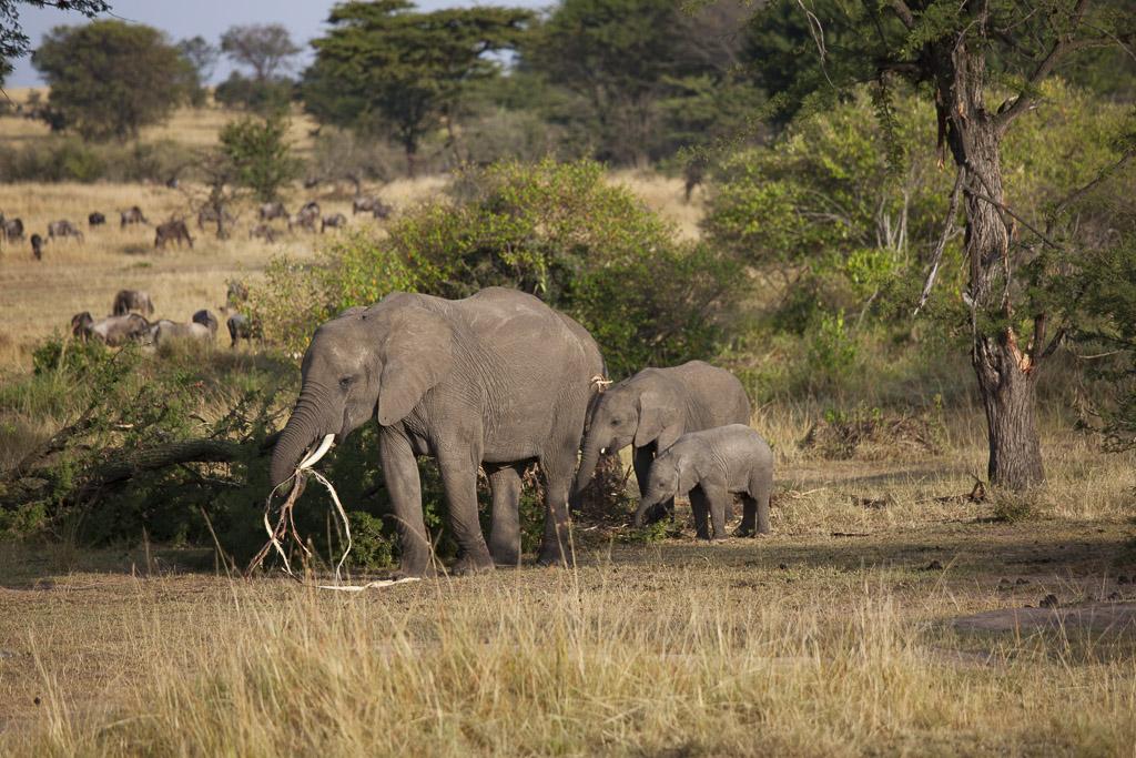 30072015 - Tanzania -  Serengeti 5D - _MG_6199