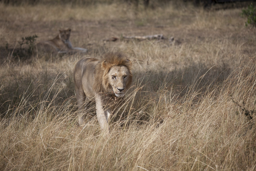 30072015 - Tanzania -  Serengeti 5D - _MG_6224