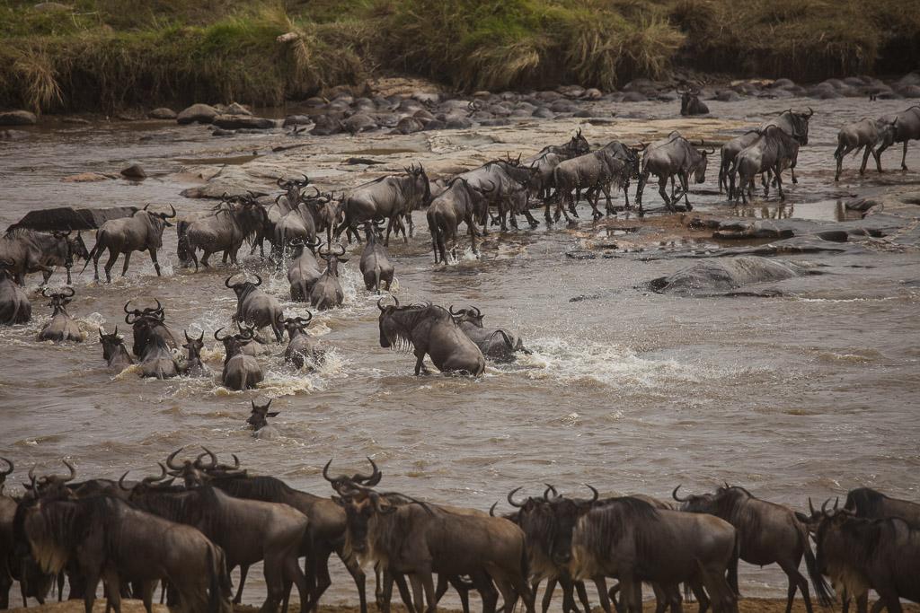 30072015 - Tanzania -  Serengeti 5D - _MG_6256
