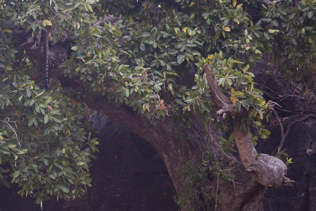 30072015 - Tanzania -  Serengeti 5D - _MG_6348