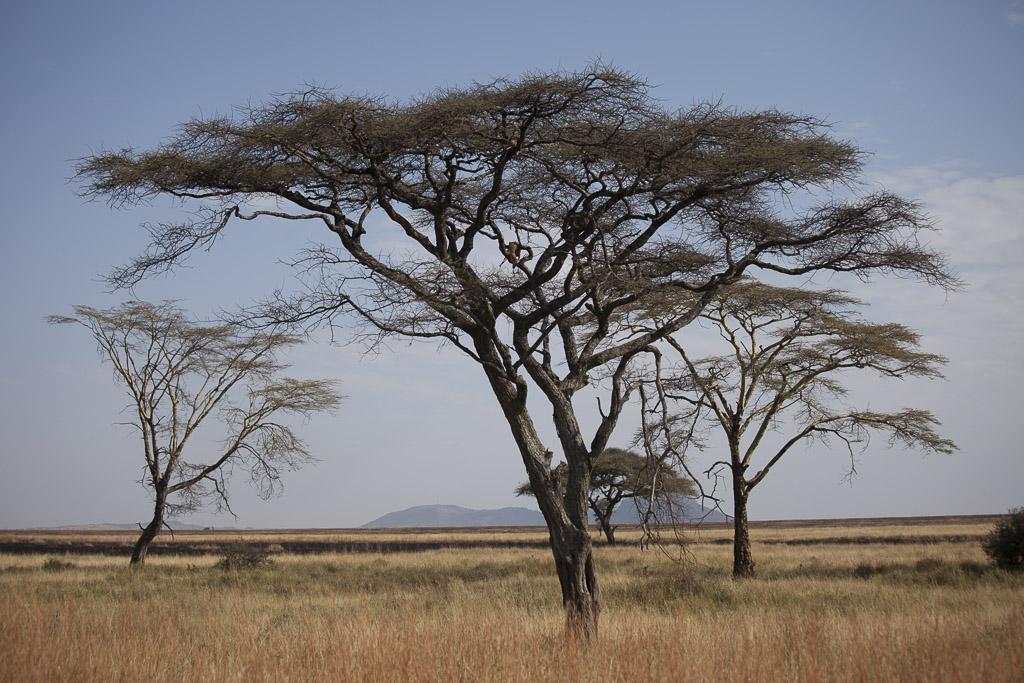 31072015 - Tanzania -  Serengeti - _MG_6356