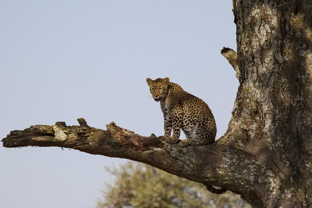 31072015 - Tanzania -  Serengeti - _MG_6360
